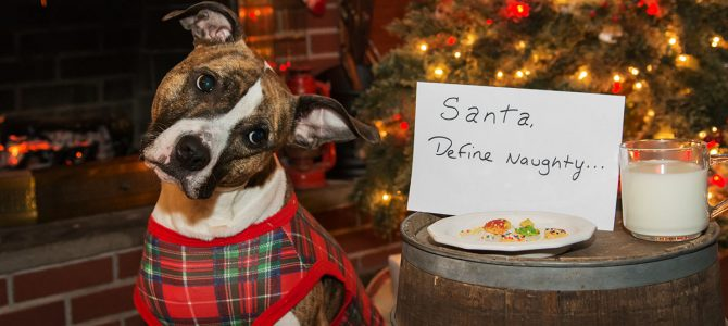 Festive Food & your Dog! Part 2 – The Nice List!