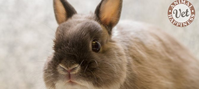 Are you feeding your rabbit healthy food?