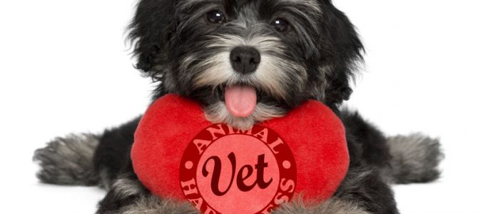 Cats and dogs and heart disease
