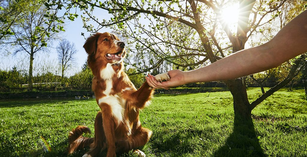 A well trained dog happy in the park