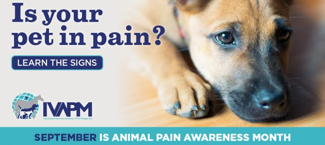 Animal pain awareness month